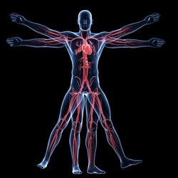 Anatomy and Physiology - Advanced Diploma