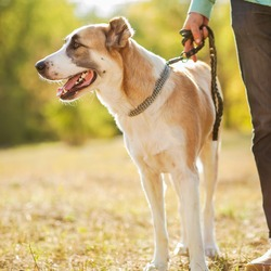 Dog Walking and Pet Home Sitting Professional Diploma