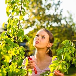 Garden Maintenance Diploma