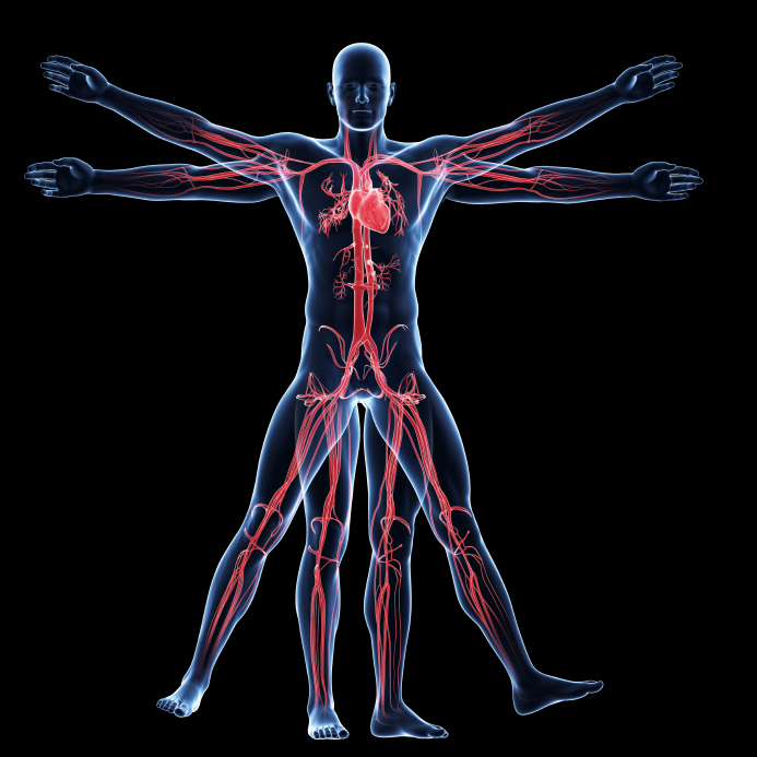 Anatomy and Physiology - Advanced Diploma - Online Academies